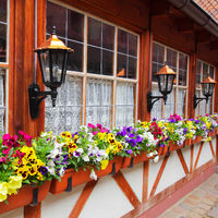 Windows with flowerpots