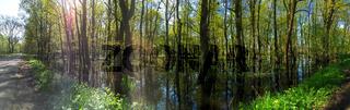 Landschaft am Dümmer See-141