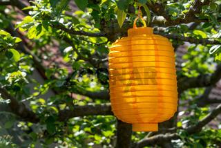 Lampion in einem sonnigen Baum