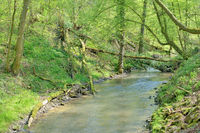 Duessel Creek in famous Neanderthal Valley near Mettmann,North Rhine Westphalia,Germany