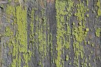 Renovierungsbedürftige Holzwand