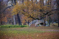 A small bridge in the autumn forest