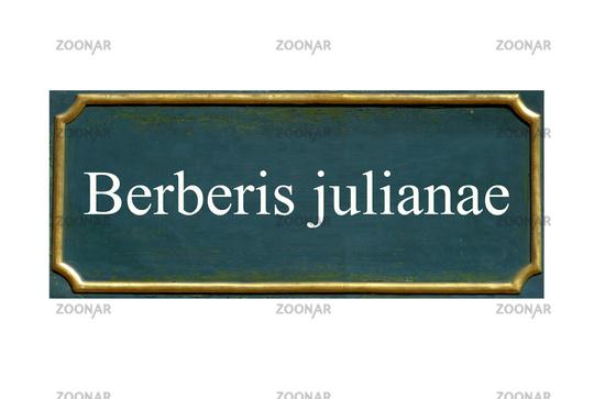 shield Berberis julianae