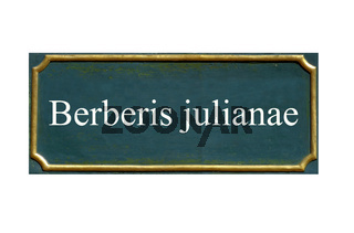 schild Berberis julianae, Julianes Berberitze
