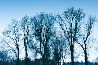 Blue trees sadness