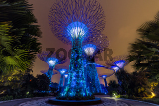 Supertree Grove in Gardens by the Bay, Singapore