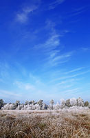winter at the Great and White Swamp near Rotenburg Wümme in Germany