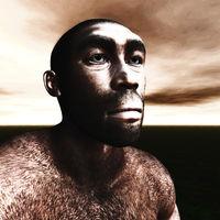 3d Illustration of a Homo Erectus