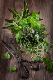Different fresh herbs with vintage garden scissors on wooden background