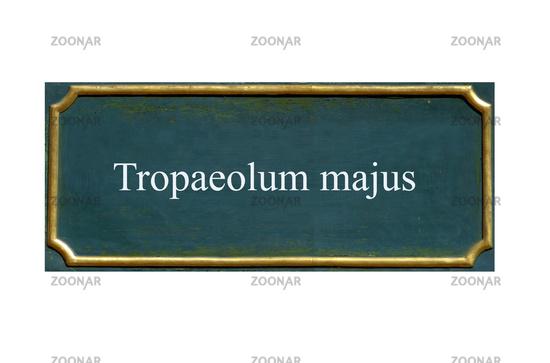 shield tropaeolum majus
