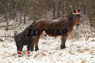 Weihnachtspferde im Schnee