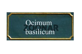 schild Basilikum