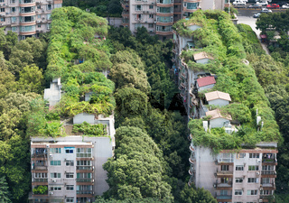 Chengdu - Buildings and vegetation
