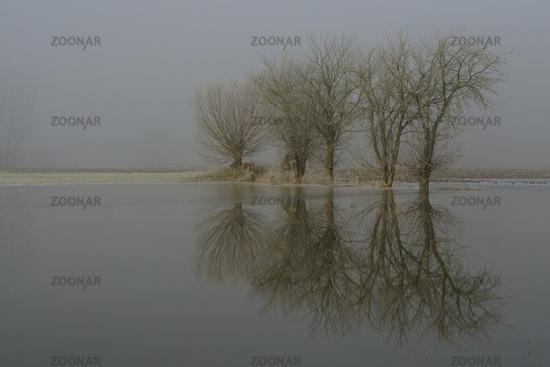 flooded farmland... Lower Rhine Area *Germany*