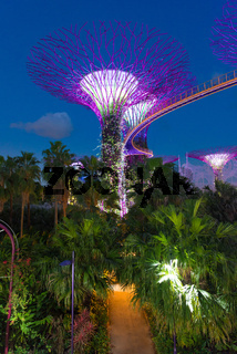 Supertrees Grove  Skyway bridge, Gardens by the Bay, Singapore