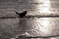 Dog on a North Sea Beach