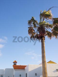 Weiße kanarische Häuser mit Palme