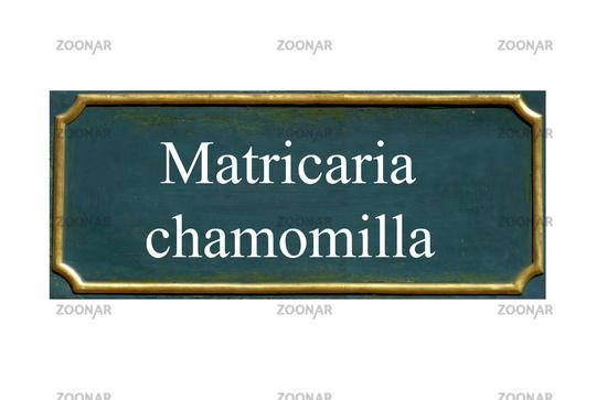 shield matricaria chamomilla