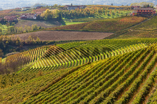 Autumnal vineyards on the hills of Piedmont, Italy.