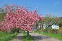 Springtime in Bergisches Land near Solingen,North Rhine Westphalia,Germany