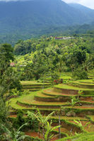 View over Jatiluwah rice terraces in Bali, Indones