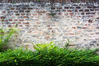 Brick Wall with bush