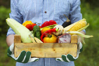 Farmer man holding wooden box filled fresh vegetables