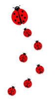 Many Ladybugs