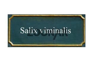 schild salix viminalis, korbweide