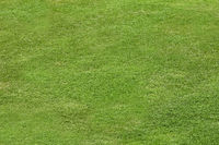 Green grass field for playing