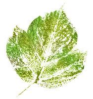 green stamp of leaf
