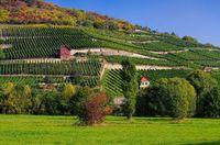 Saale Unstrut Weinberge - Saale Unstrut vineyards 05