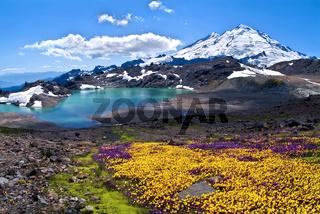 Wildflowers Blooming on Mount Baker