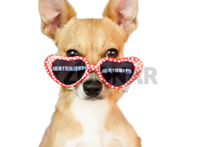 Cute dog with heart sunglasses