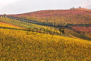Colorful autumnal vineyard.