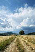 Feldweg im Hegau