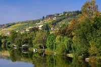 Saale Unstrut Weinberge - Saale Unstrut vineyards 09
