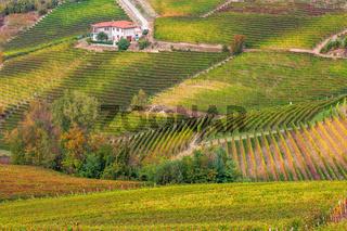 Colorful autumnal vineyards.