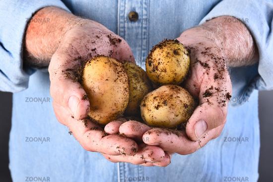 Farmer Holding Organic Potatoes