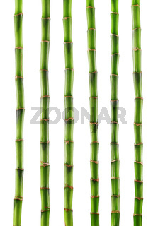 Fresh bamboo isolated