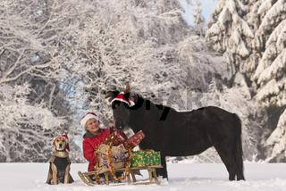 Weihnachtsidyll mit Hund und Pony