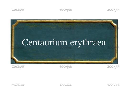 shield centaurium erythraea