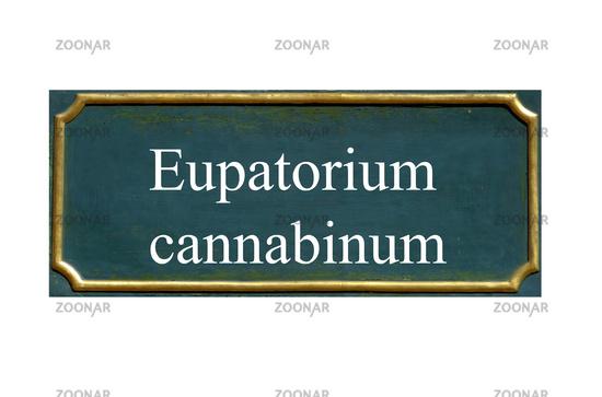 shield eupatorium cannabinum