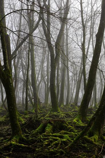 Fen Woodland, Bavaria, Germany