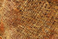Fragment of palm tree bark