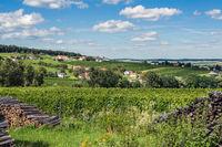 vineyard deutsch schützen / southern burgenland