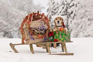 Weihnachtsschlitten mit Hund