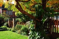 Hinterhofidylle mit Fachwerkhaus und Baumbestand in Colmar