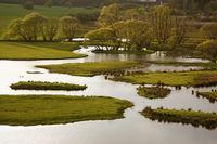 Blies Wetlands