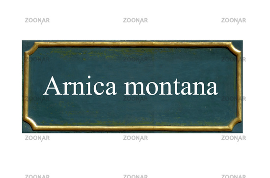 shield arnica montana